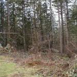 NE Thousand Oaks Drive-- Wooded Lot