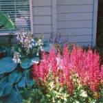 1990 Salmon Run SW Albany Oregon-- Landscaping