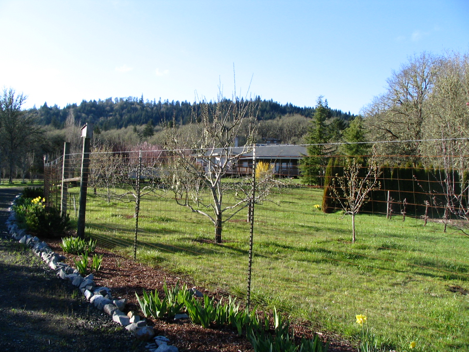 2081 Dawnwood Drive Philomath Oregon-- Back of Home