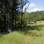 4461 NW Honeysuckle Drive Corvallis Oregon-- Lot 59
