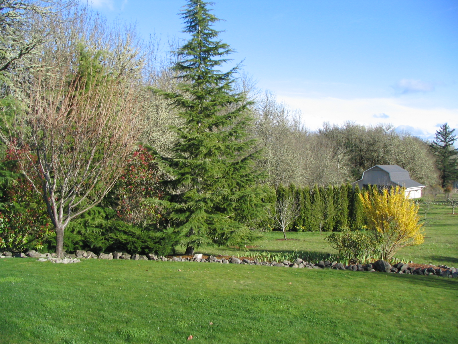 2081 Dawnwood Drive Philomath Oregon-- View of Yard