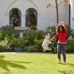 bubble jumping dog