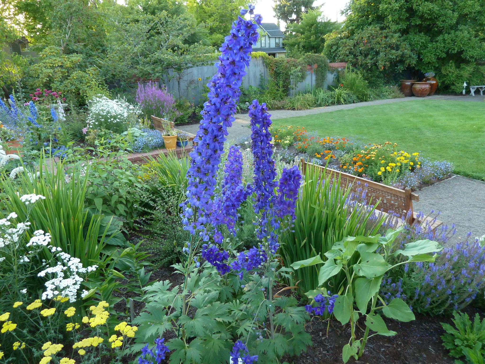 206 NW 8th Street, Corvallis, Oregon-View of Garden