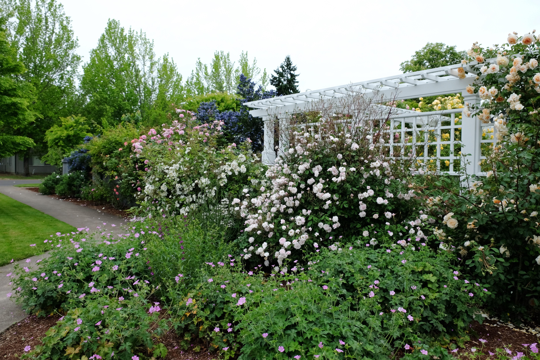 206 NW 8th Street, Corvallis, Oregon-Garden